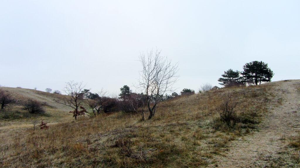 Perchtoldsdorfer Heide